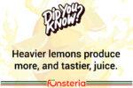 A Juicy Tidbit About Lemons