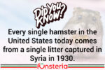 Have Hamster Will Travel