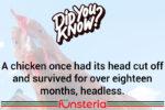 """Was the Headless Chicken a """"No-Brainer""""?"""