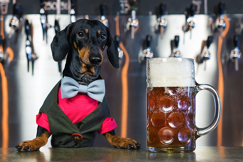 The barman and the dog