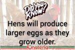 Eggs-actly What You Wanted To Know