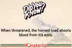 Horned Toads Hurl Hemoglobin?
