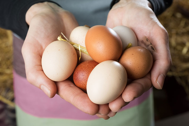 Eggs in marriage